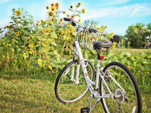 Kreetan pyöräilymatka